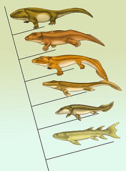 evolution fish