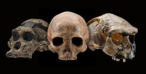 skulls smithsonian